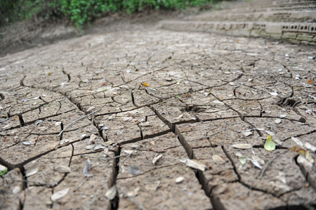 mire: land with dry cracked ground Stock Photo