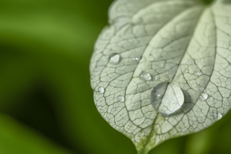 passion  ecology: Water droplets on leaves Stock Photo