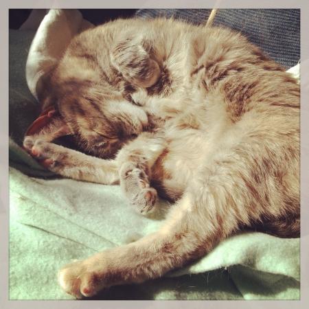 Cat taking a nap in the sun.  版權商用圖片