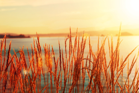 Sea grass silhouetted with ocean surf Stock Photo