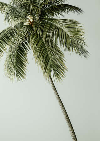 Tropical palm on green background