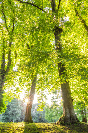 green environment: green forest treetop with sunrays horizontal. can be used for green forest, park, environment and summer themes
