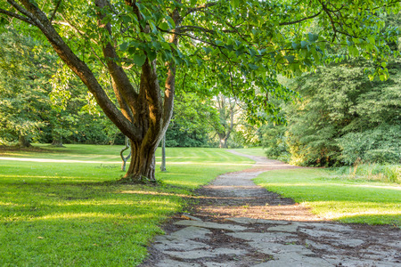 green park: beautiful tree in green park with pathway. can be used for green forest, park, environment and summer themes Stock Photo