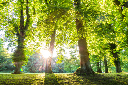 日差しと緑の森の梢。緑の森、公園、環境、夏のテーマに使用できます。