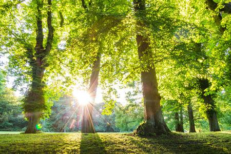 sunrays와 녹색 숲 오솔길입니다. 녹색 숲, 공원, 환경 및 여름 테마에 사용할 수 있습니다.
