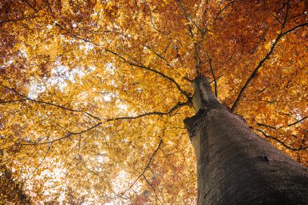 오렌지 잎 가을 가을 나무 스톡 콘텐츠