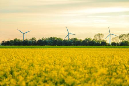 Molinos de viento y campo de colza. se puede utilizar para el medio ambiente, los molinos de viento, la energía, la cosecha, la violación, la industri y temas climáticos