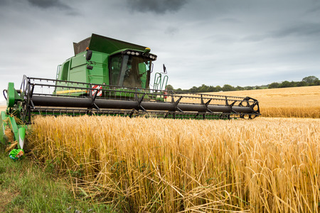 Combine harvester at work harvesting field of crop. Harvest season themes and other agriculture