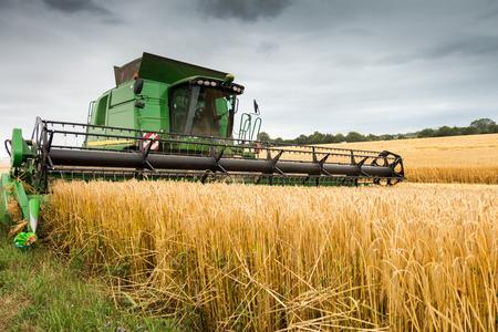 cultivo de trigo: M�quina segadora en el trabajo de campo de la cosecha de los cultivos. Cosecha temas temporada y otra agricultura