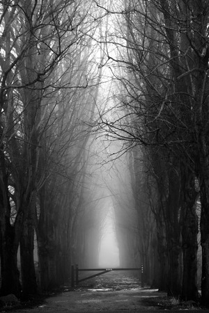 terrifying: scary spooky forest in black and white for halloween. can be used for halloween, scary, spooky, forest, evil, danger and terrifying themes