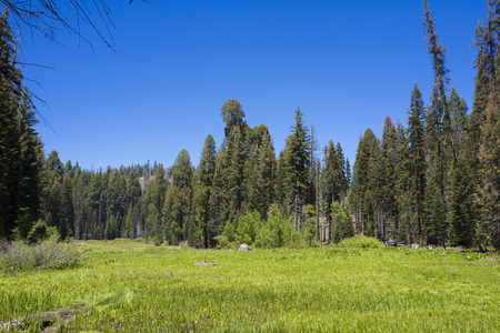 A meadow in the spring at Yosemite National Park 写真素材