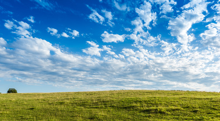 Pretty green Meadow with beautiful blue sky background with copy space