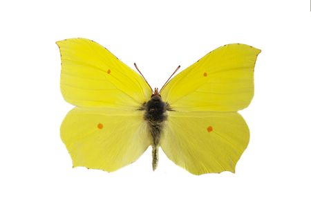 Beautiful bright yellow butterfly isolated on a white background photo