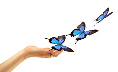 mariposa azul: Libertad Foto de archivo