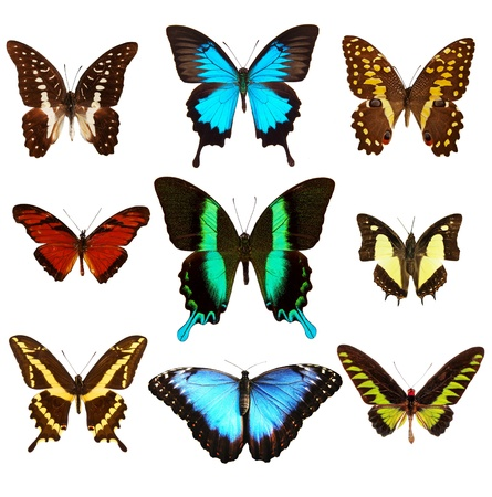 Collection of various kinds of butterflies, isolated on white background photo