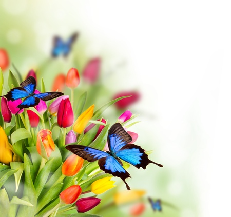 april flowers: Spring flowers with exotic butterflies