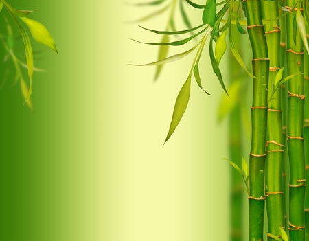 a serene life: Young bamboo sprouds background Stock Photo