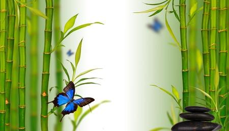 lucky bamboo: Spa still life