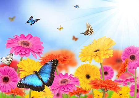 Prairie de printemps Banque d'images - 12936870