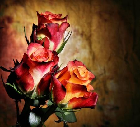 rosas naranjas: Rosas en el fondo del grunge Foto de archivo