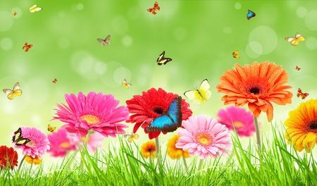 exotic butterflies: flores gerberas de colores con mariposas ex�ticas Foto de archivo