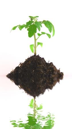 geen: Geen plant Stock Photo