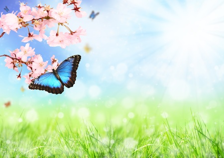 photosynthesis: Beautiful spring meadow with exotic butterfly on blooming branch