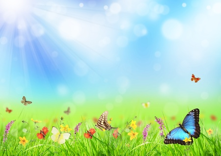 Beautiful spring meadow with butterflies photo
