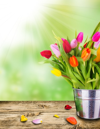 Beautiful spring tulips in bucket on wooden plank. Stock Photo