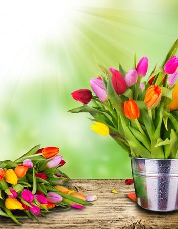 Beautiful spring tulips in bucket on wooden plank Stock Photo - 12576361
