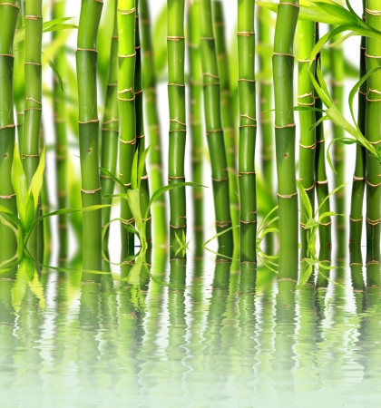Bamboo reflected on water surface  photo