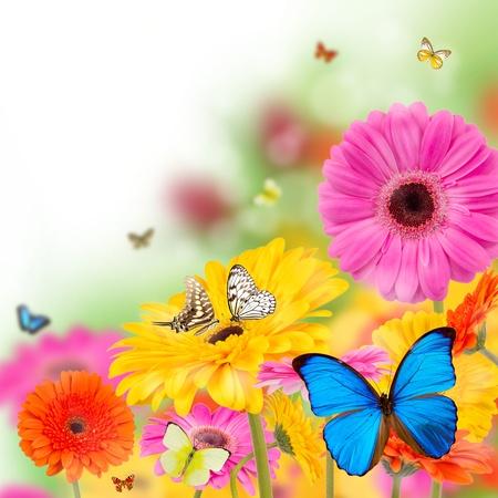 Gerber flowers with butterflies photo