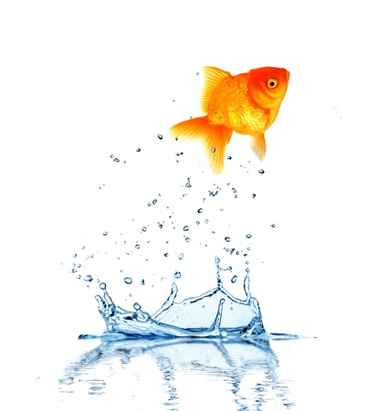 Jumping fish out of water, concept of challenge. Isolated on white background photo