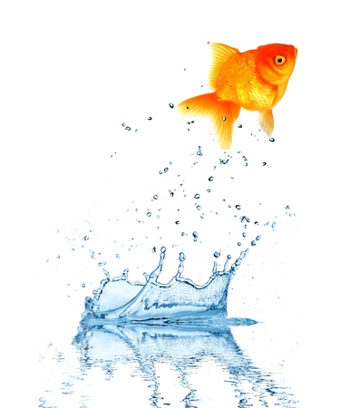 Risk Free: Jumping fish out of water, concept of challenge. Isolated on white background Stock Photo
