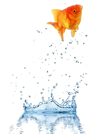 Jumping fish out of water, concept of challenge. Isolated on white background