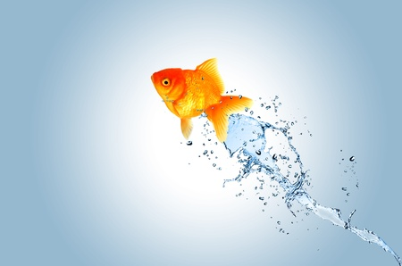 Jumping fish out of water, concept of challenge photo
