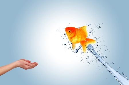 Jumping fish into hand, concept of challenge photo