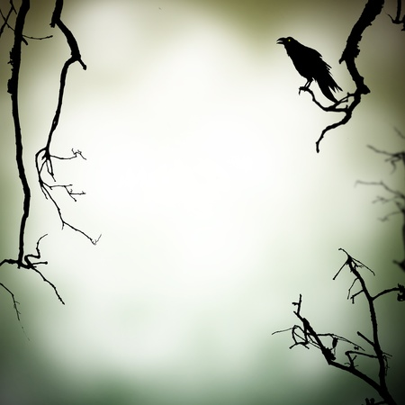 crows: Horror background Stock Photo