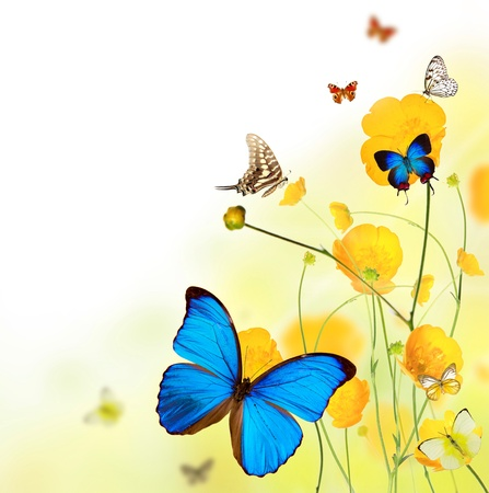 Beautiful flower background with exotic butterflies  photo
