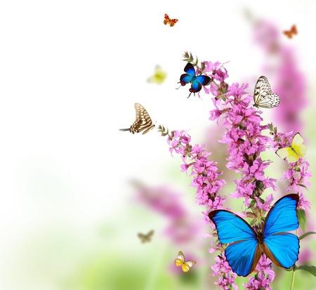 flores fucsia: Hermosa flor de fondo con mariposas exóticas