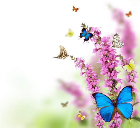 exotic butterflies: Hermosa flor de fondo con mariposas ex�ticas