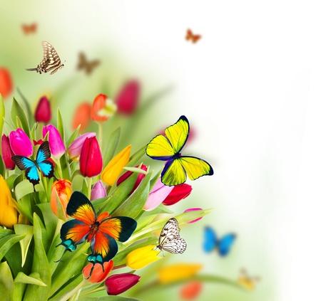 Flores tulipanes de colores con mariposas exóticas