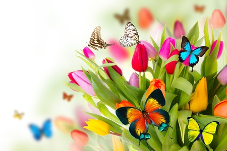 Colored tulips flowers with exotic butterflies  Reklamní fotografie