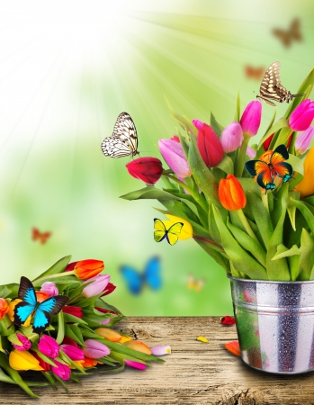 yellow butterfly: Colored tulips flowers with exotic butterflies Stock Photo
