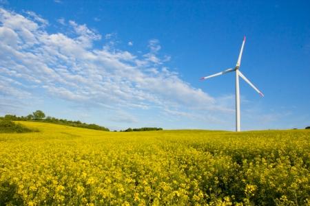 Windmühle in Rapsfeld