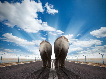 Two elephants walking on runway with sunny sky  photo