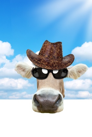 Funny cow portrait Stock Photo - 14441837