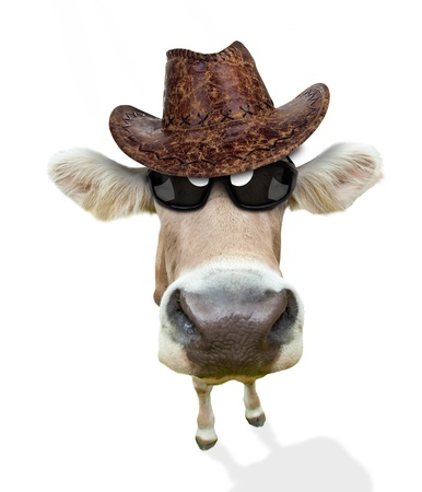 animals horned: Funny cow portrait, isolated on white background Stock Photo