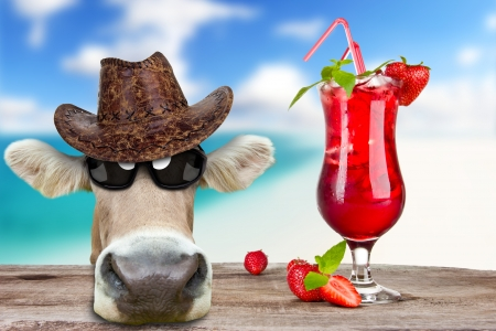 Funny cow with drink, concept of summer holidays photo