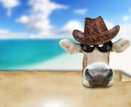 Funny cow portrait, concept of summer holidays photo